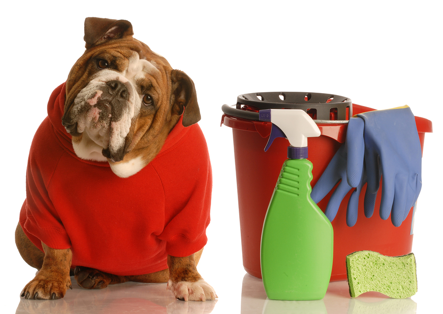 Spring Cleaning Tips For Dog Owners Noble Veterinary Center